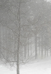 photo of snow scene used for my NH landscape painting - 27 dec 2010